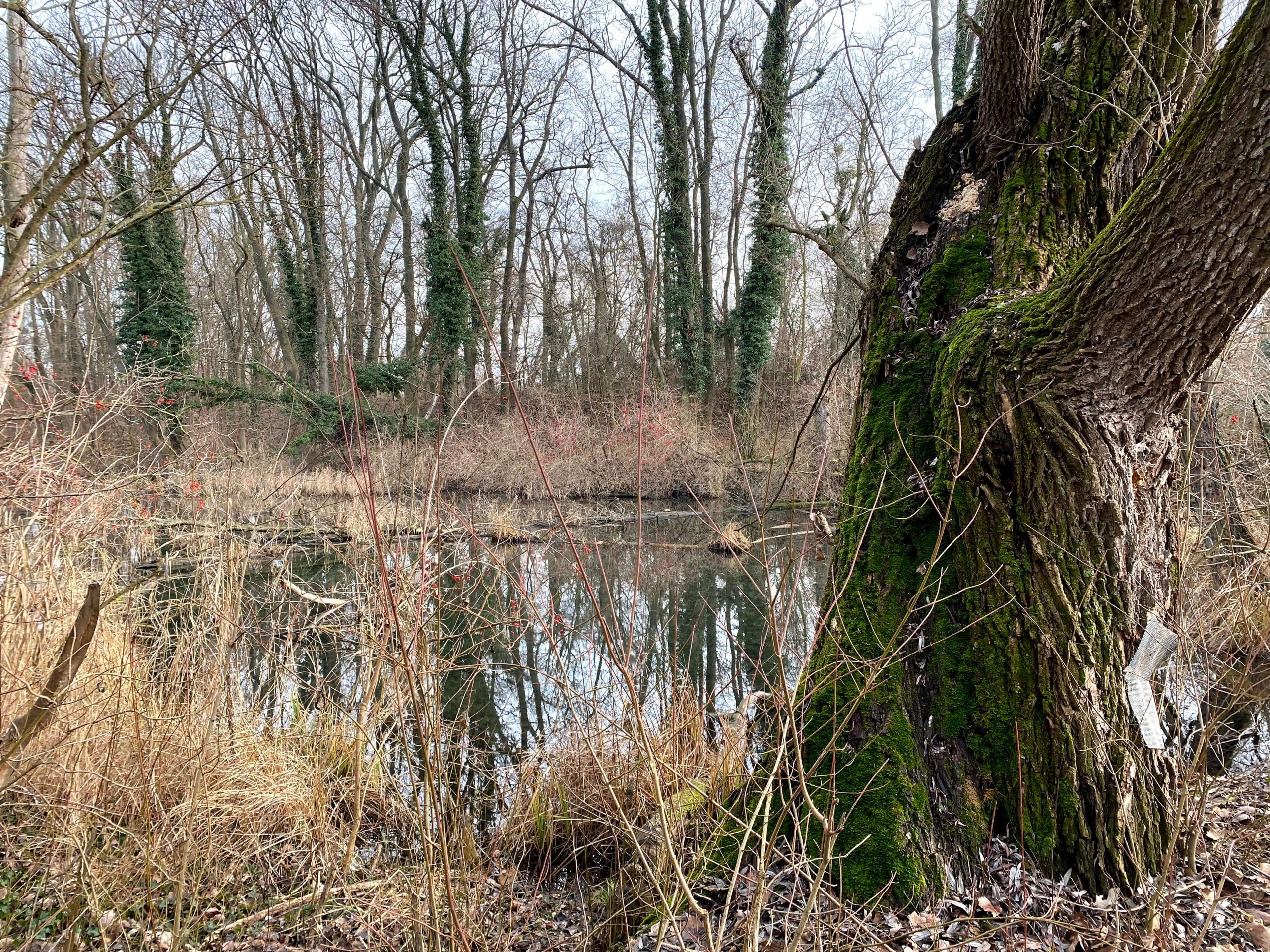 Lužné lesy, močiare, riečna delta - Dunajské luhy.